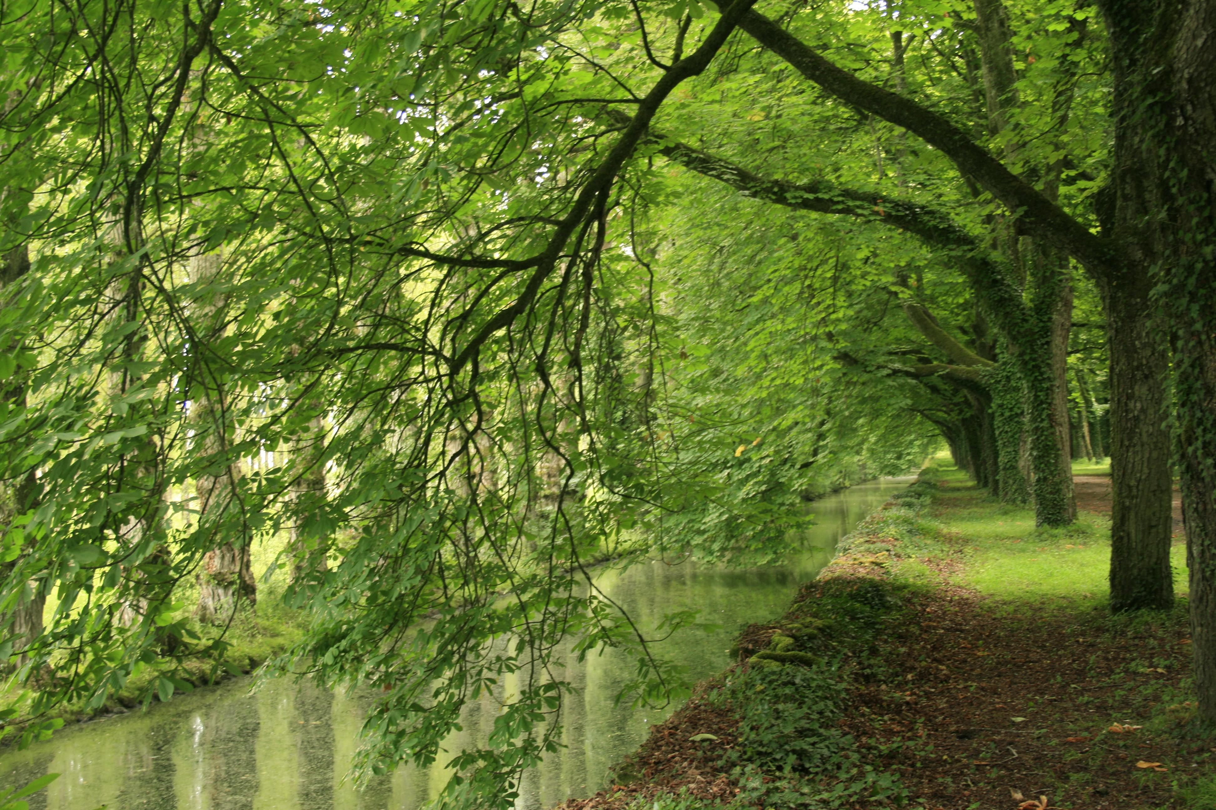 Canal du Cher