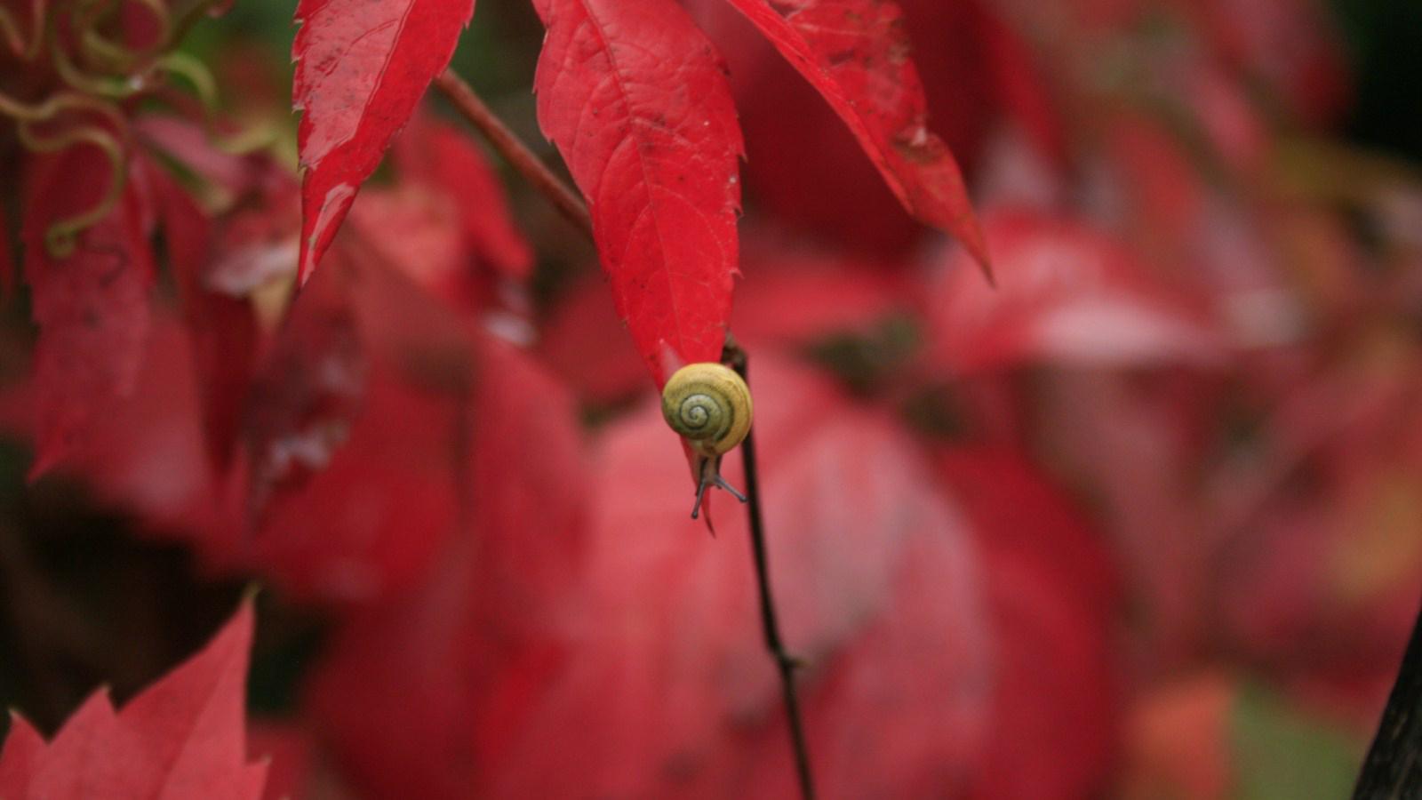 rouge escargot