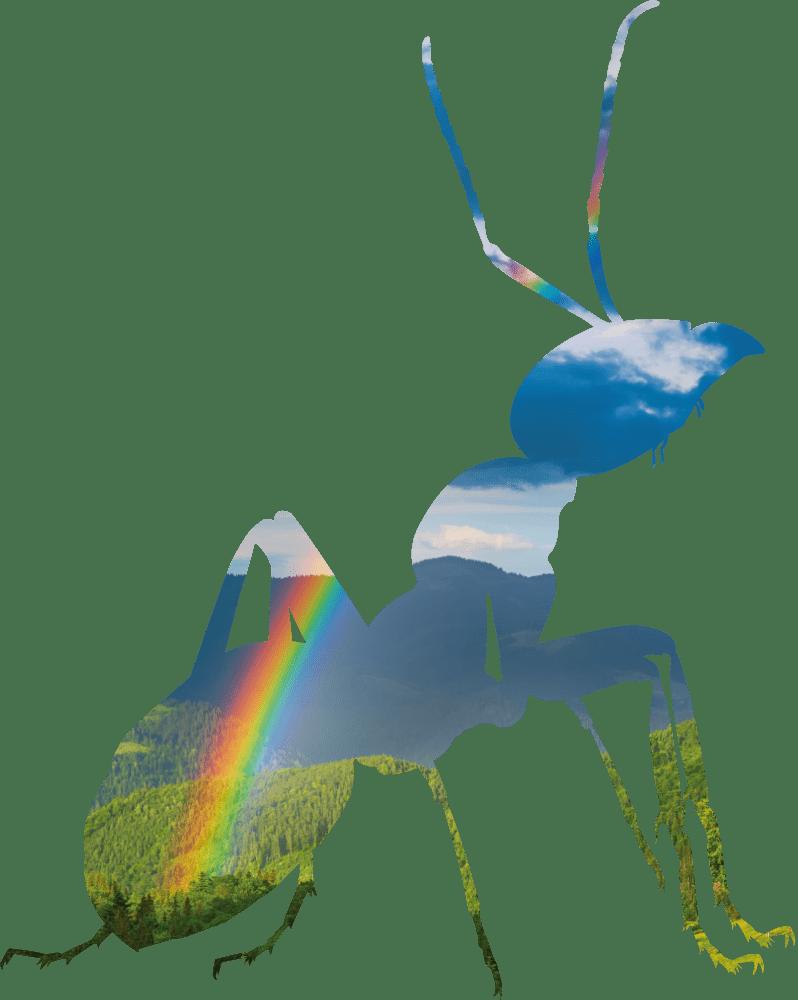 fourmi-couleur-big